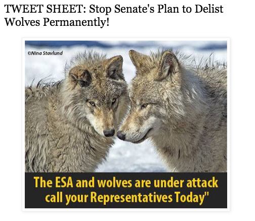EcoUprising - Stop Senate plans to deslist wolves permanently!