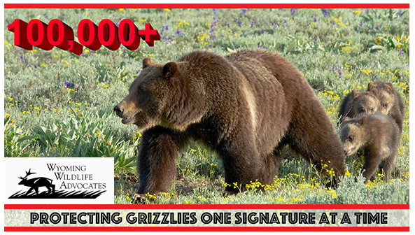 Do NOT delist grizzly bears!